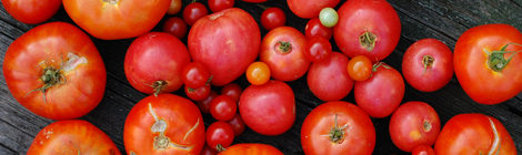 5 Ways to Use Up Tomatoes